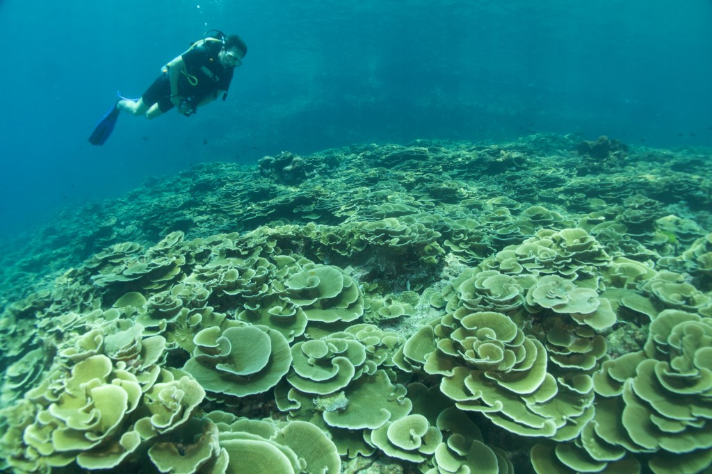 ボン島の浅場サンゴ