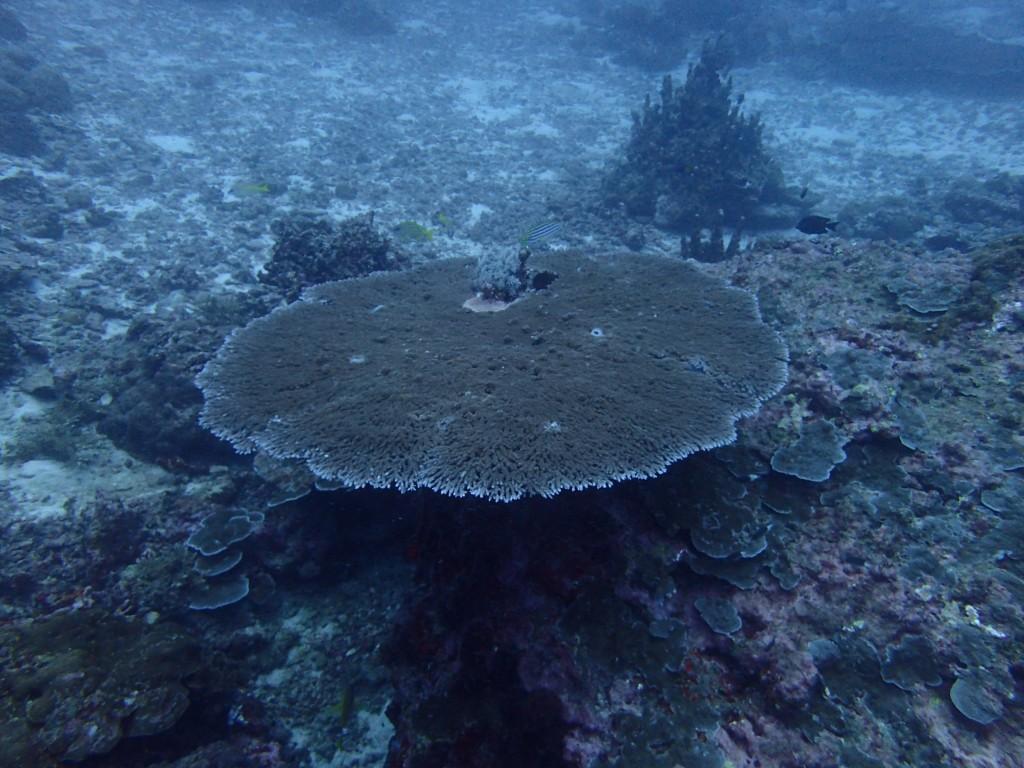 サンゴも生き生き!