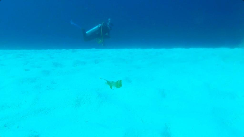ホシテンスの幼魚@モニュメントベイ/シミラン諸島No.5,6