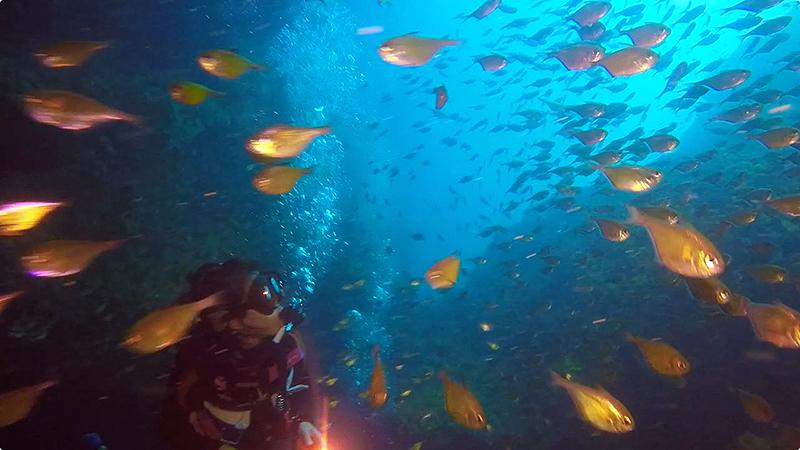 ハタンポの群れ@Shark Cave(ミャンマークルーズ)