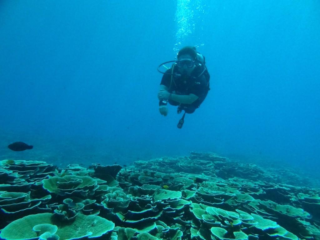 美しいキッカサンゴの群生@ボン島